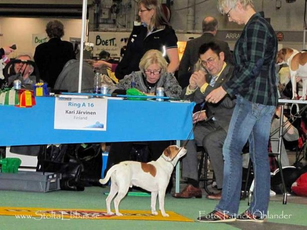 2:nd Best Male at Nordic Winner Dog Show 2011 SE uCH Stolta Ebbas Eiktyrner Of Sweden