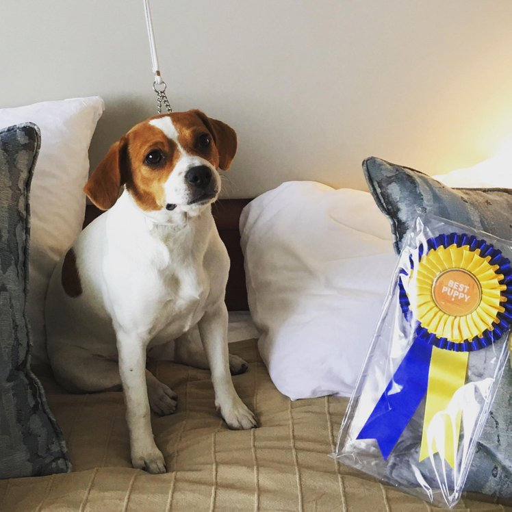 BEST PUPPY OF THE BREED Specials at World Dog Show 2018 Stolta Ebbas Jarla Jofrid Of Sweden